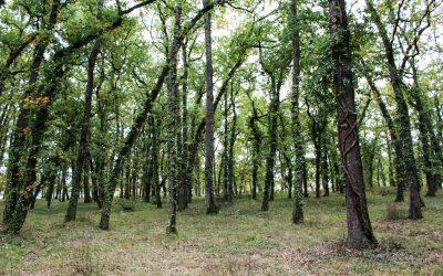 FRONTON : une ville au cœur de la nature qui garde la nature au cœur de la ville