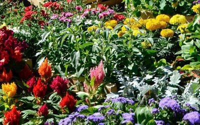 Des jardins familiaux à Fronton
