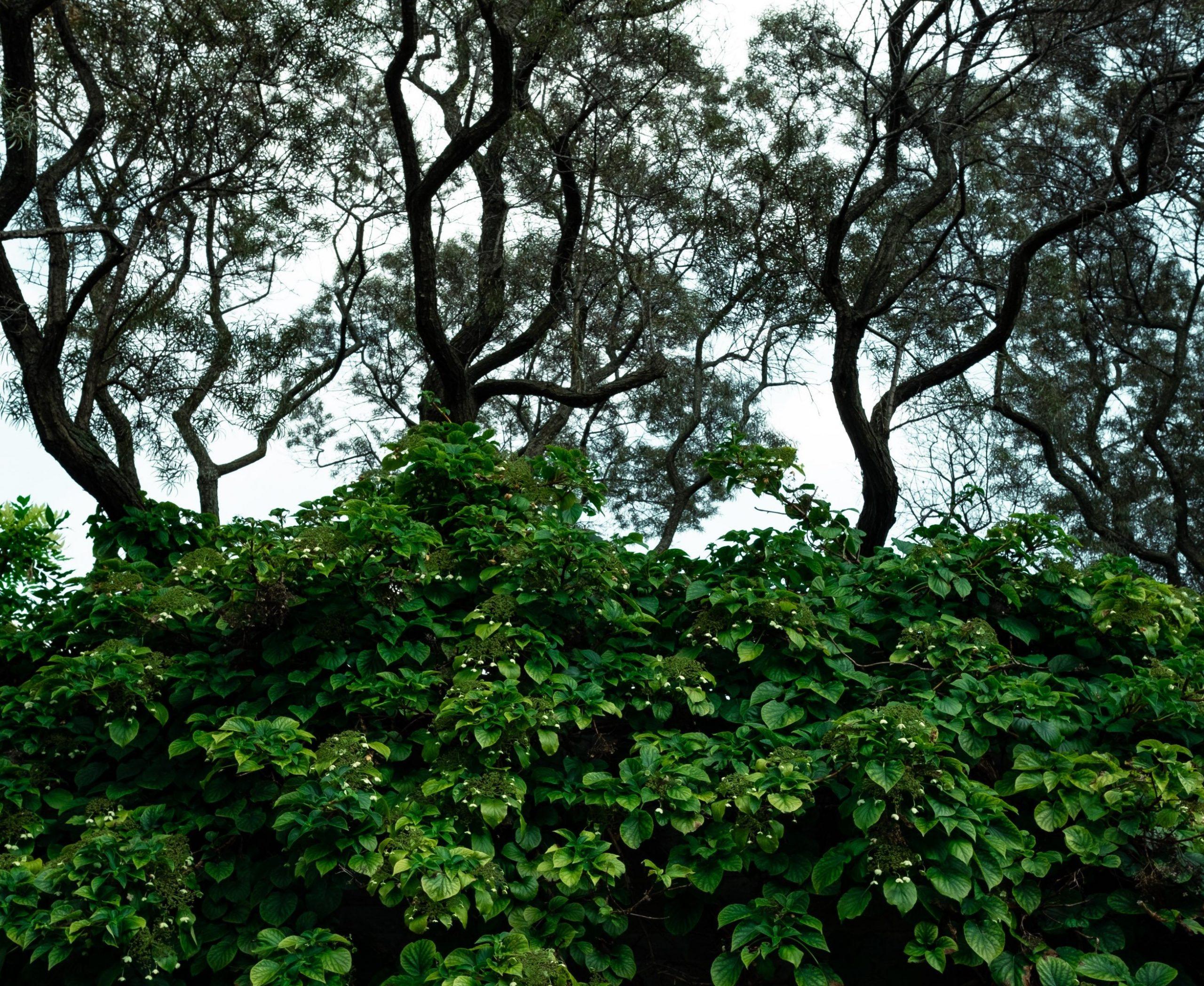 L'élagage des végétaux en limite du domaine public